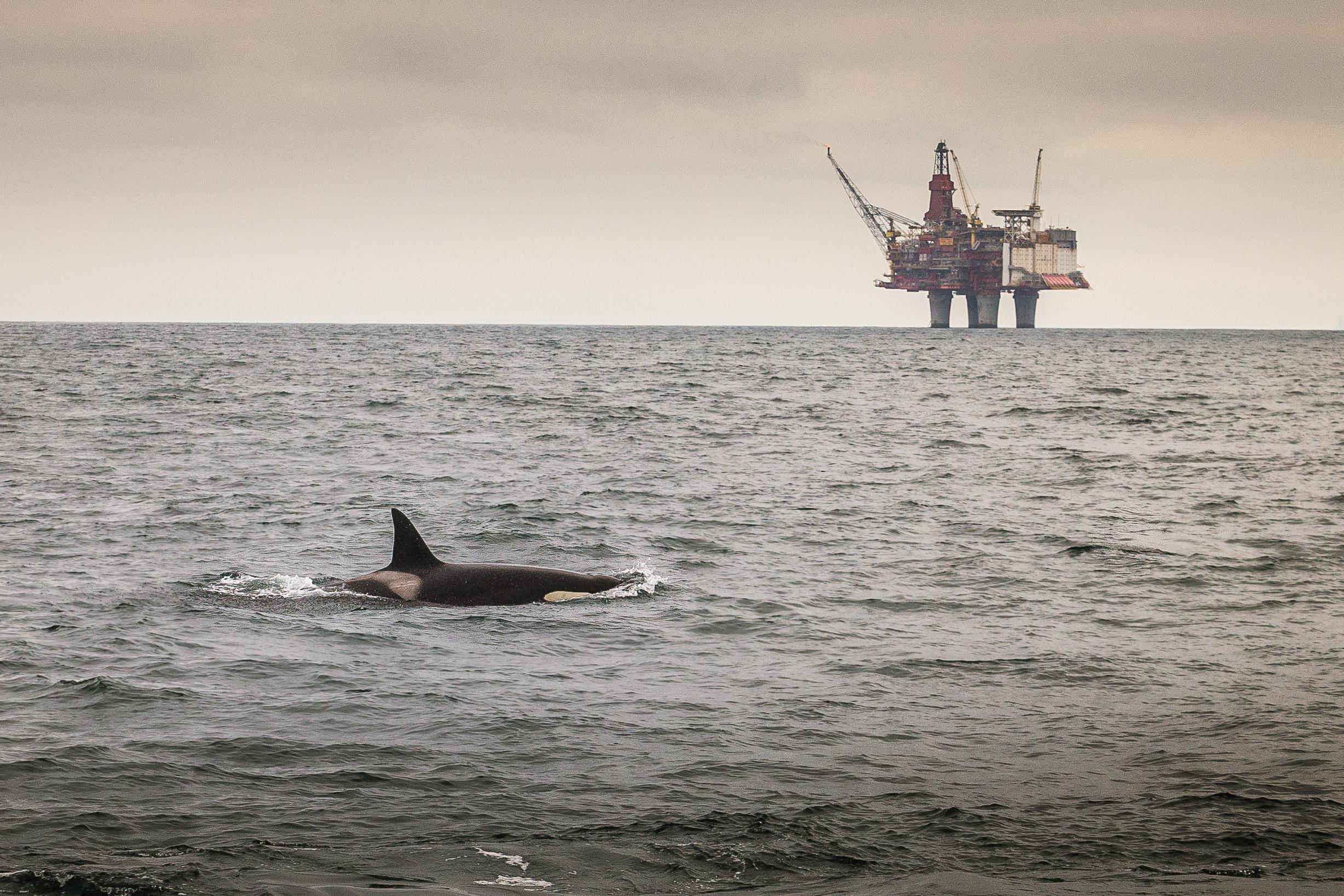 Orca-9.jpg