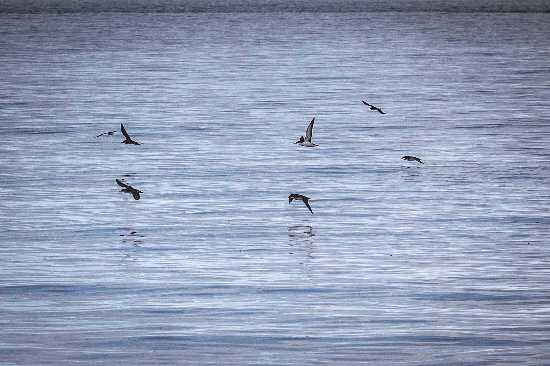 Boat based bird watching