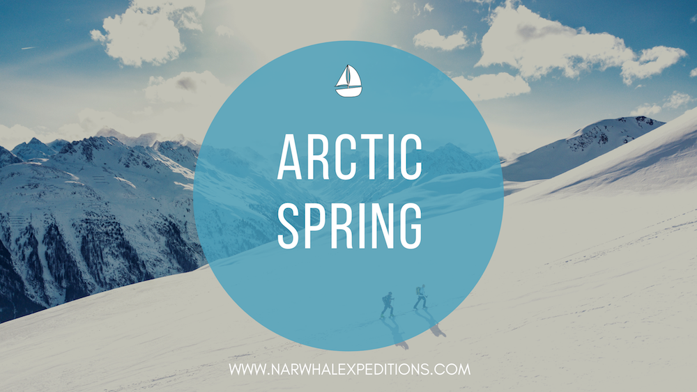 Experience the beauty of the arctic in springtime