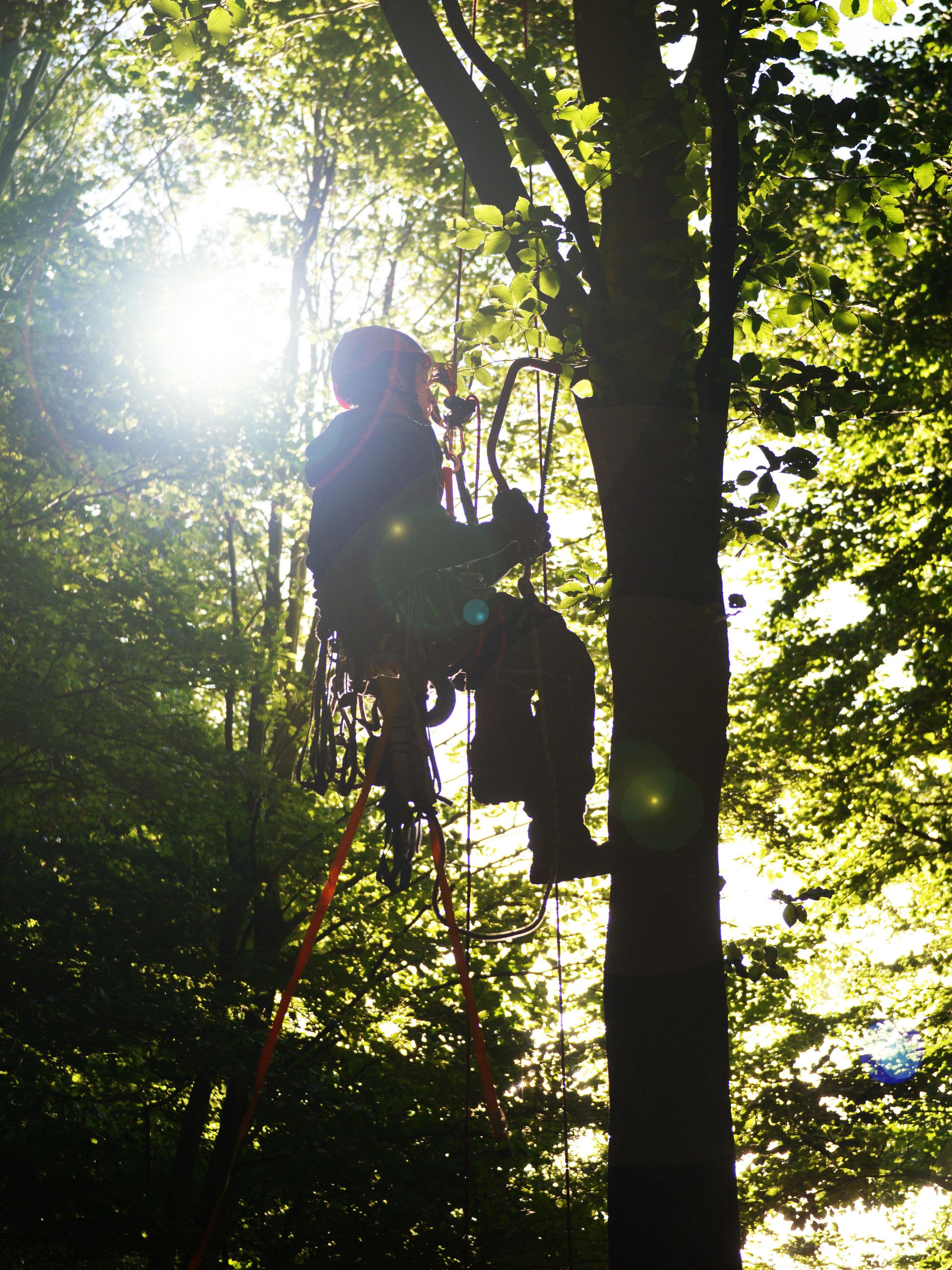 Baumhauslager - Zusammen bauen wir uns vom 22. Juli bis 3. August 2019 in der Region Bern-Freiburg eine Unterkunft in luftiger Höhe und erfahren dabei die Natur auf eine einzigartige Weise. Neben dem Bauen und vielen anderen Aktivitäten, erleben wir auch besinnliche Momente und Lagerfeuerromantik.Weitere Infos