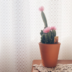 Day 43: Today I'm grateful for my plants because they brighten up my room!