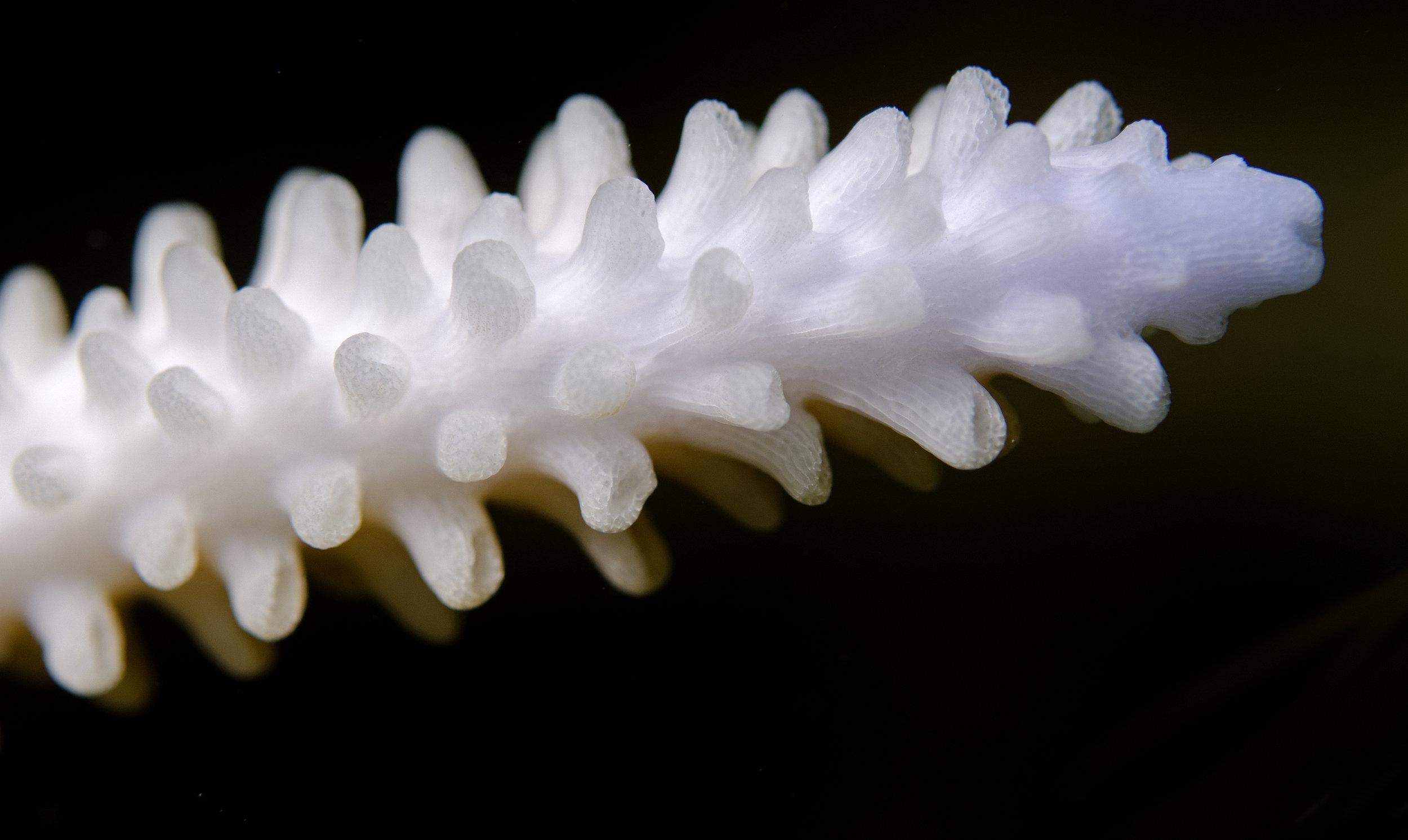 Coral-bleaching.jpg