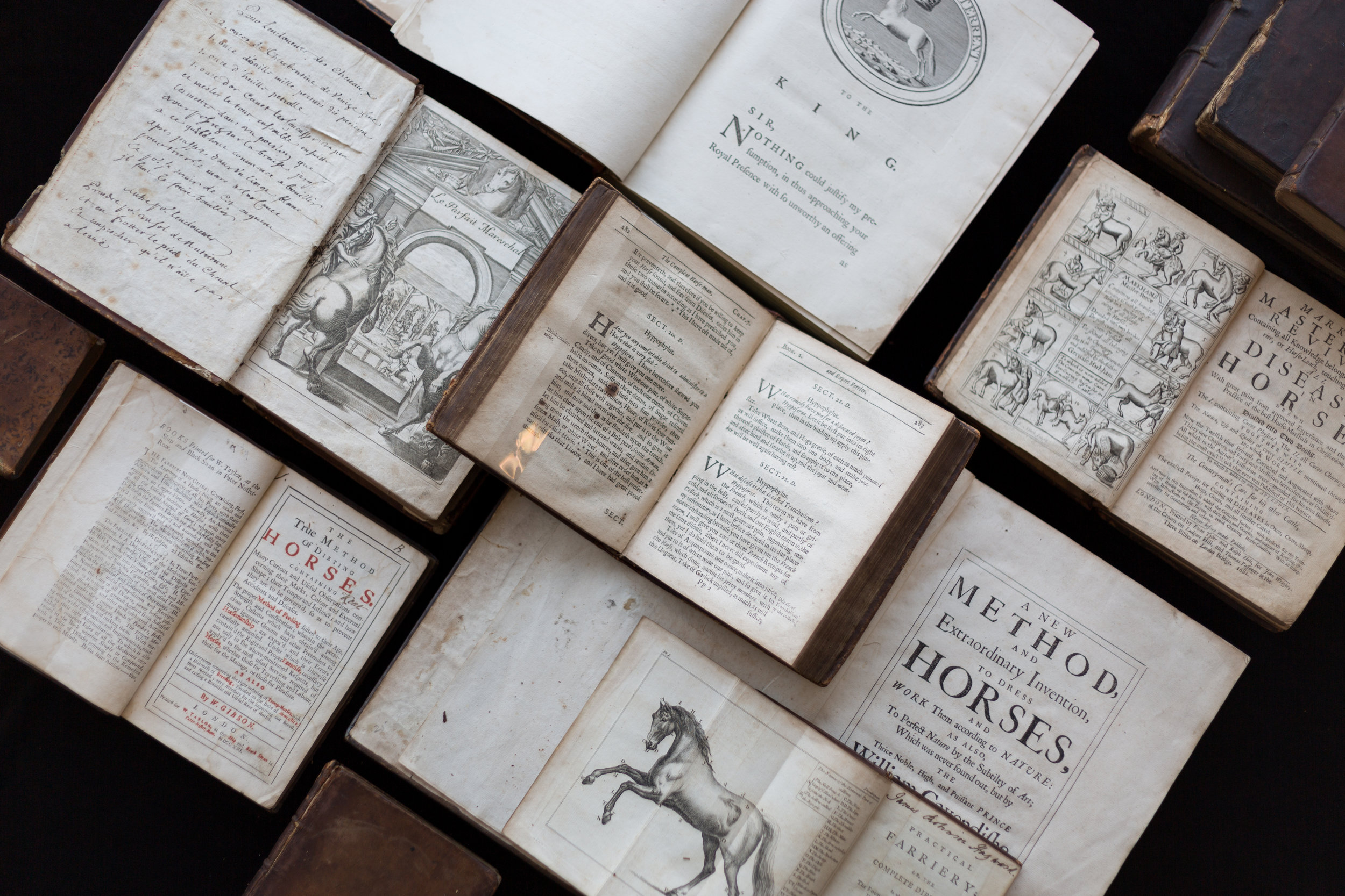 Horse Books - Set 2 -9242.jpg