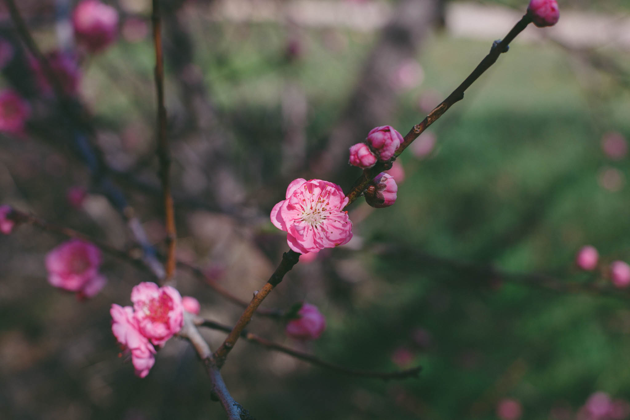 10 Lifestyle Photos for April l | Lenkaland Photography