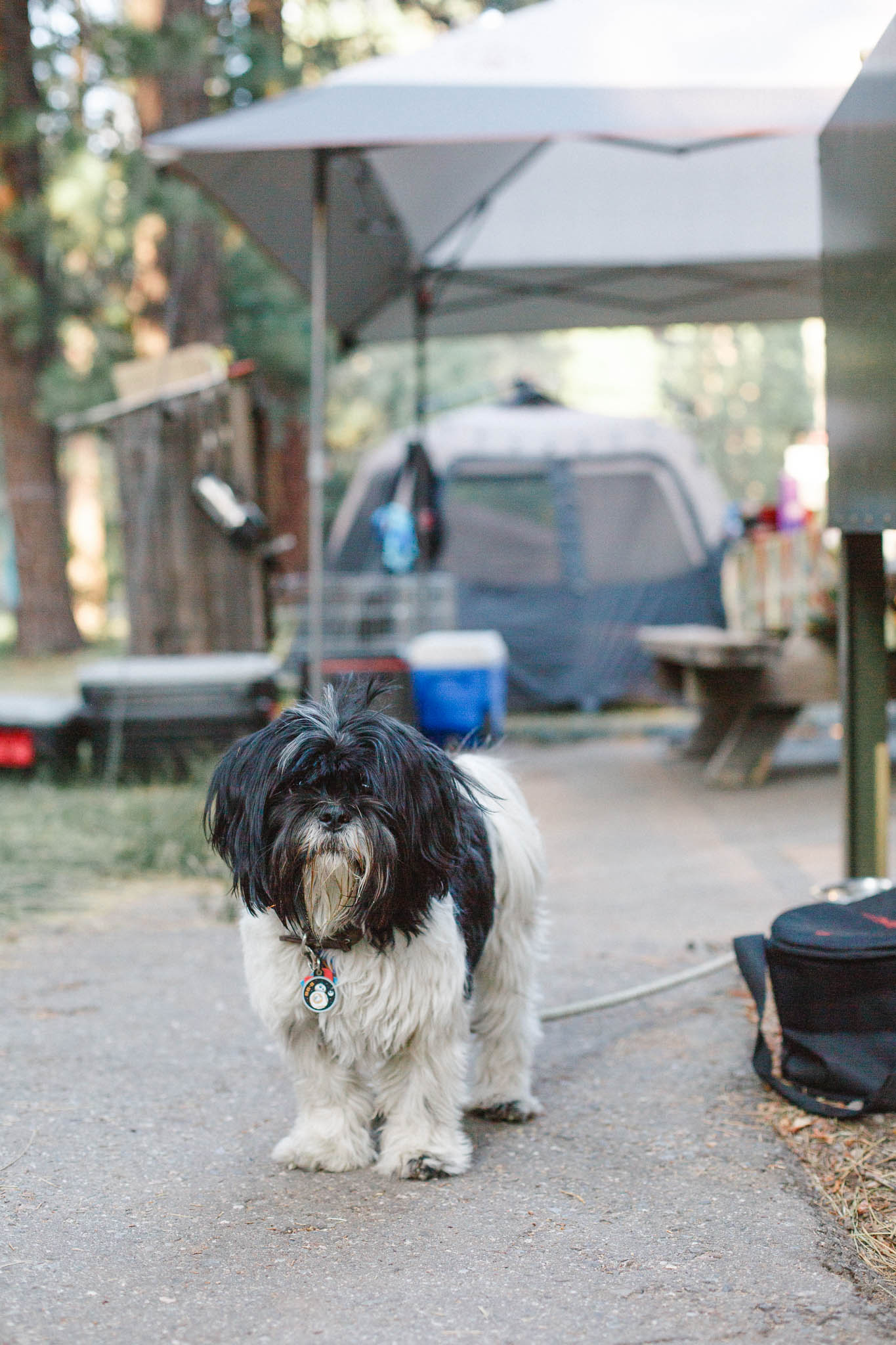 Camping at Grover Hot Springs State Park