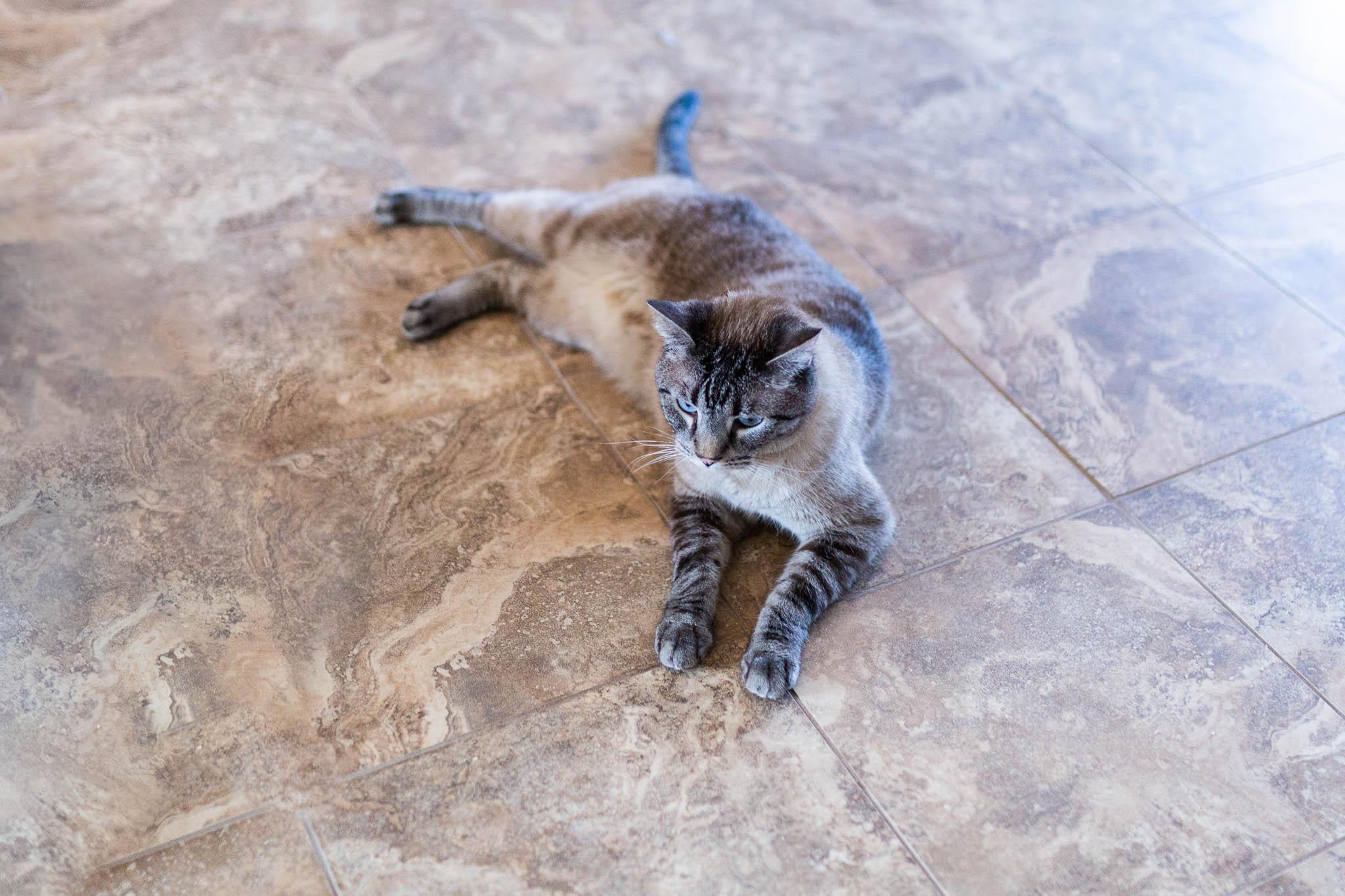 Cats at AnimalSave   Lenkaland Photography
