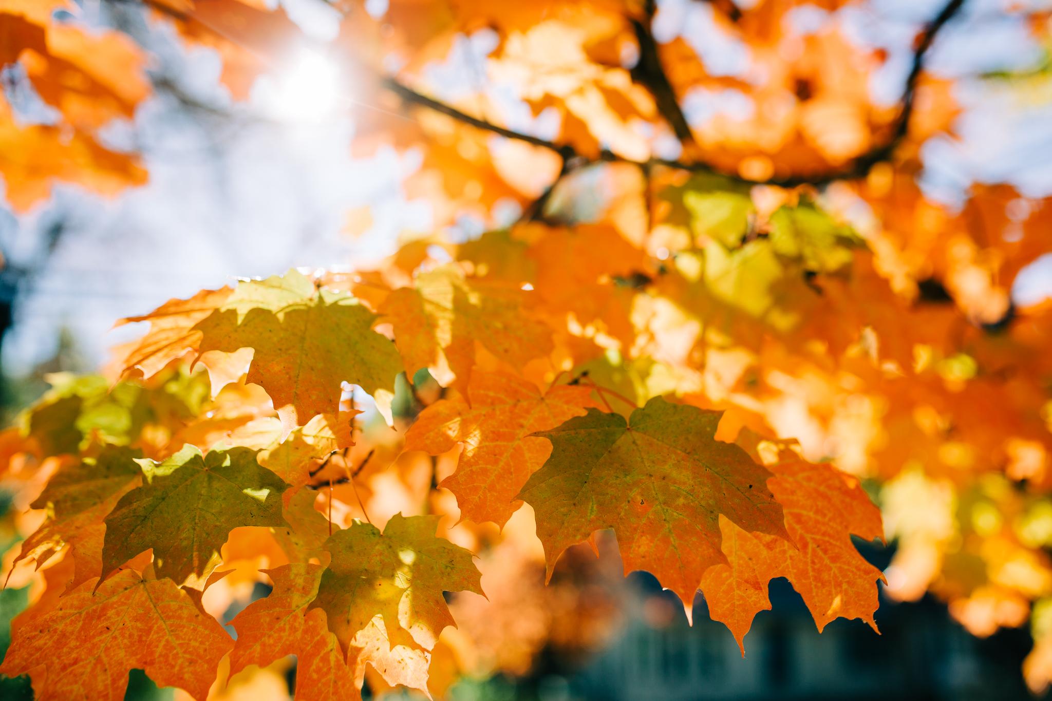 Nevada City in Autumn | Lenkaland Photography