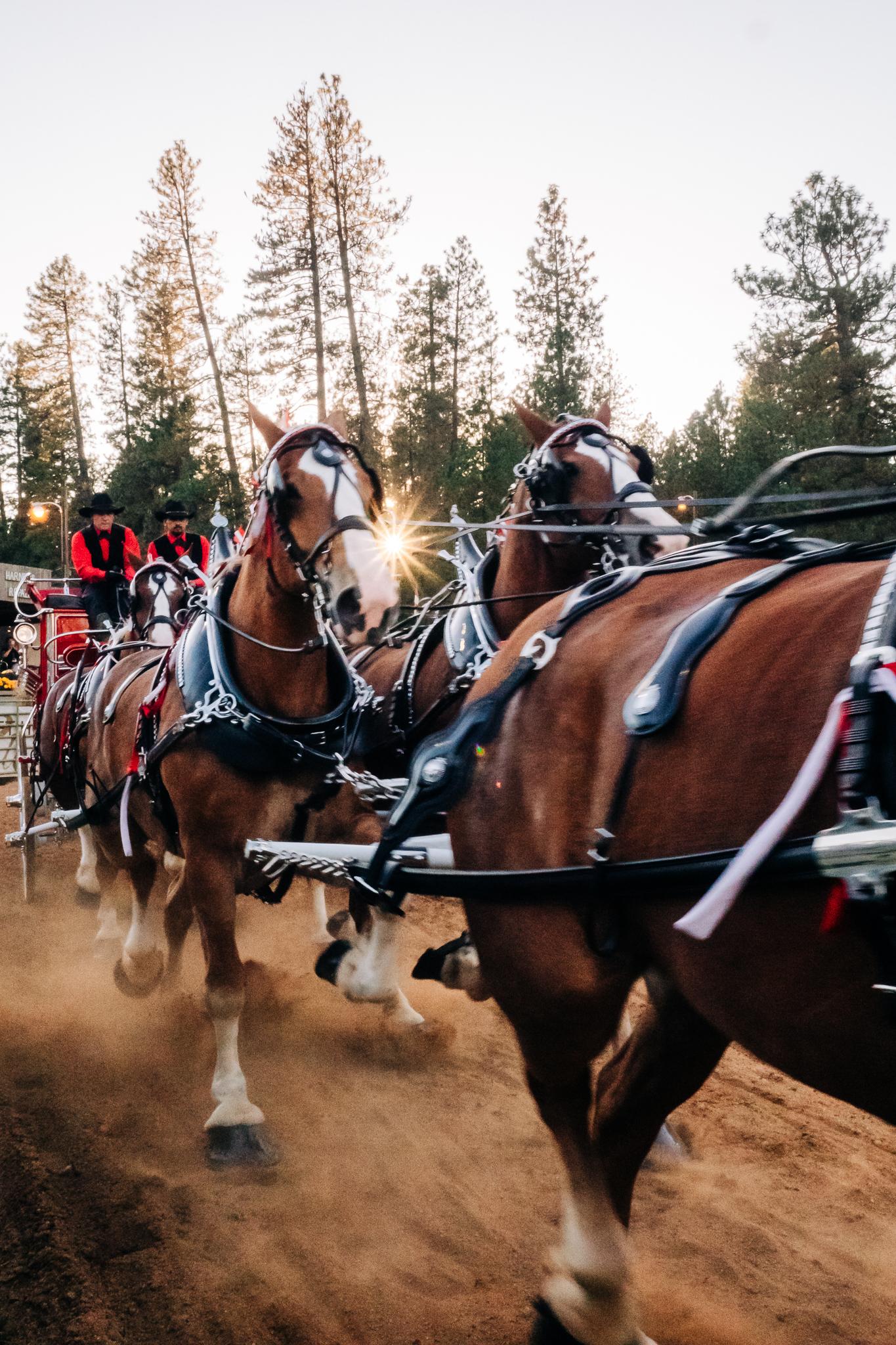 Draft Horse Classic at the Nevada County Fairgrounds   Lenkaland