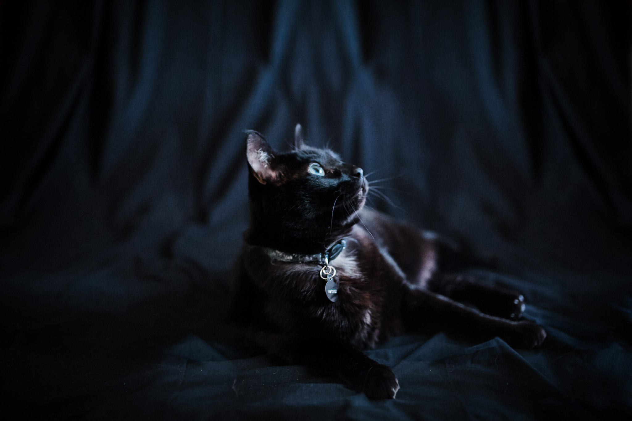 Pet Photography | Lenkaland Photography