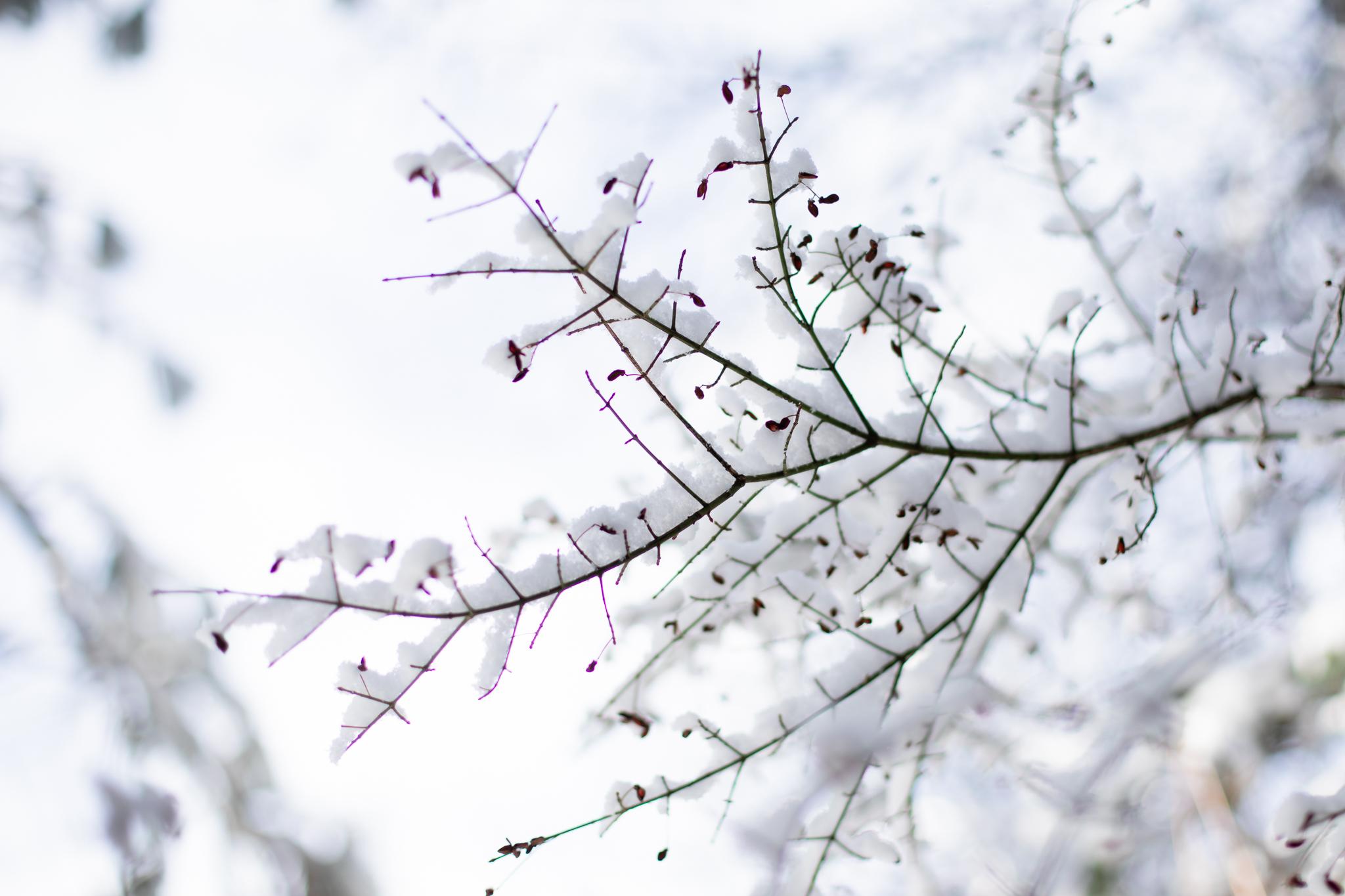 Snow | Lenkaland Photography