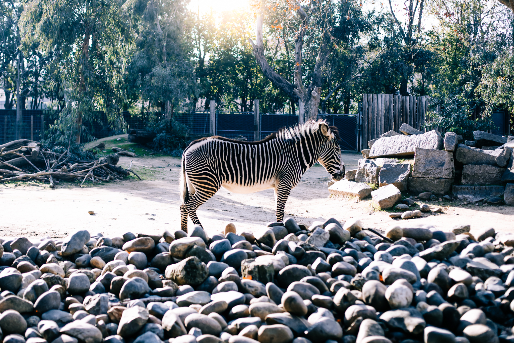 Sacramento Zoo by Lenkaland Photography