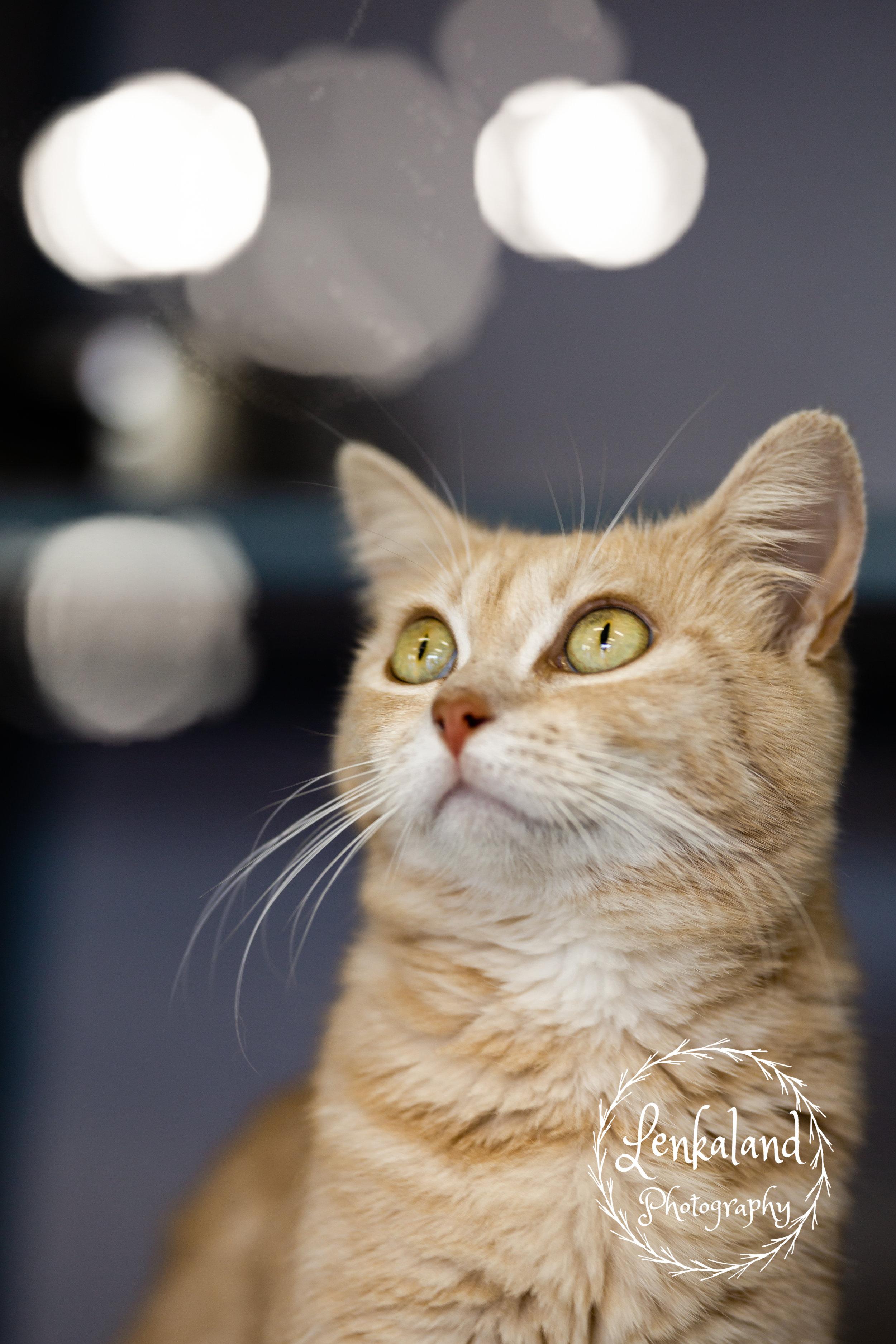 Cats at AnimalSave | Lenkaland Photography