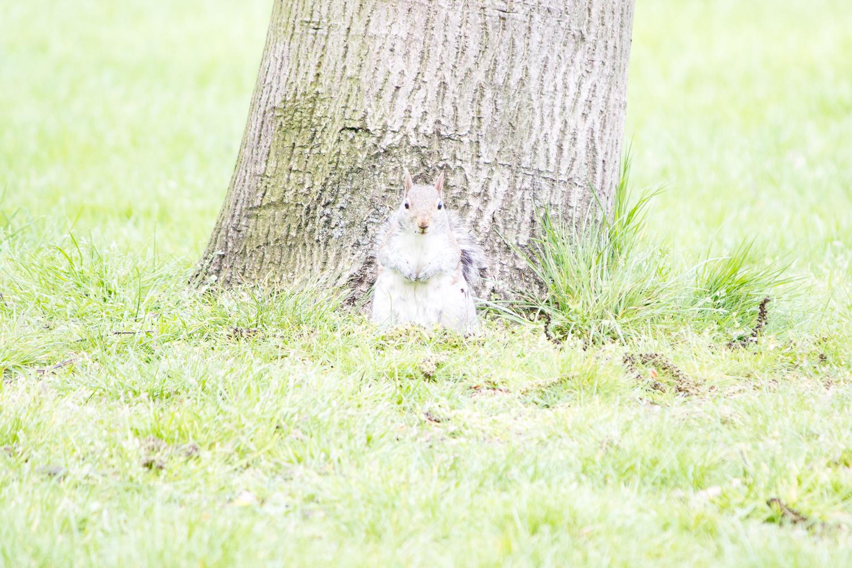 écureuil Londres surexposée