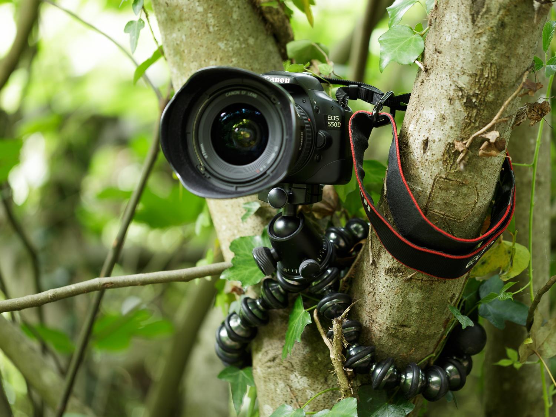 Gorillapod Focus arbre