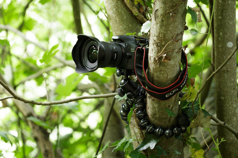 Gorilladpod Focus arbre