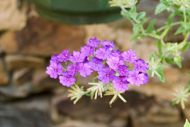 Fleur grande profondeur de champ