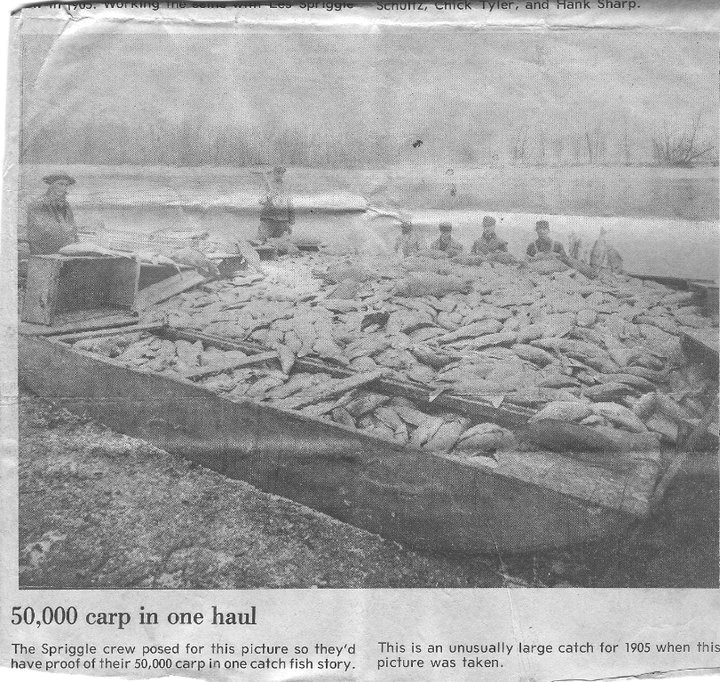 50,000 carp in one haul from Lake Pepin in 1905. Frank believes that the paper likely meant 50,000 pounds.