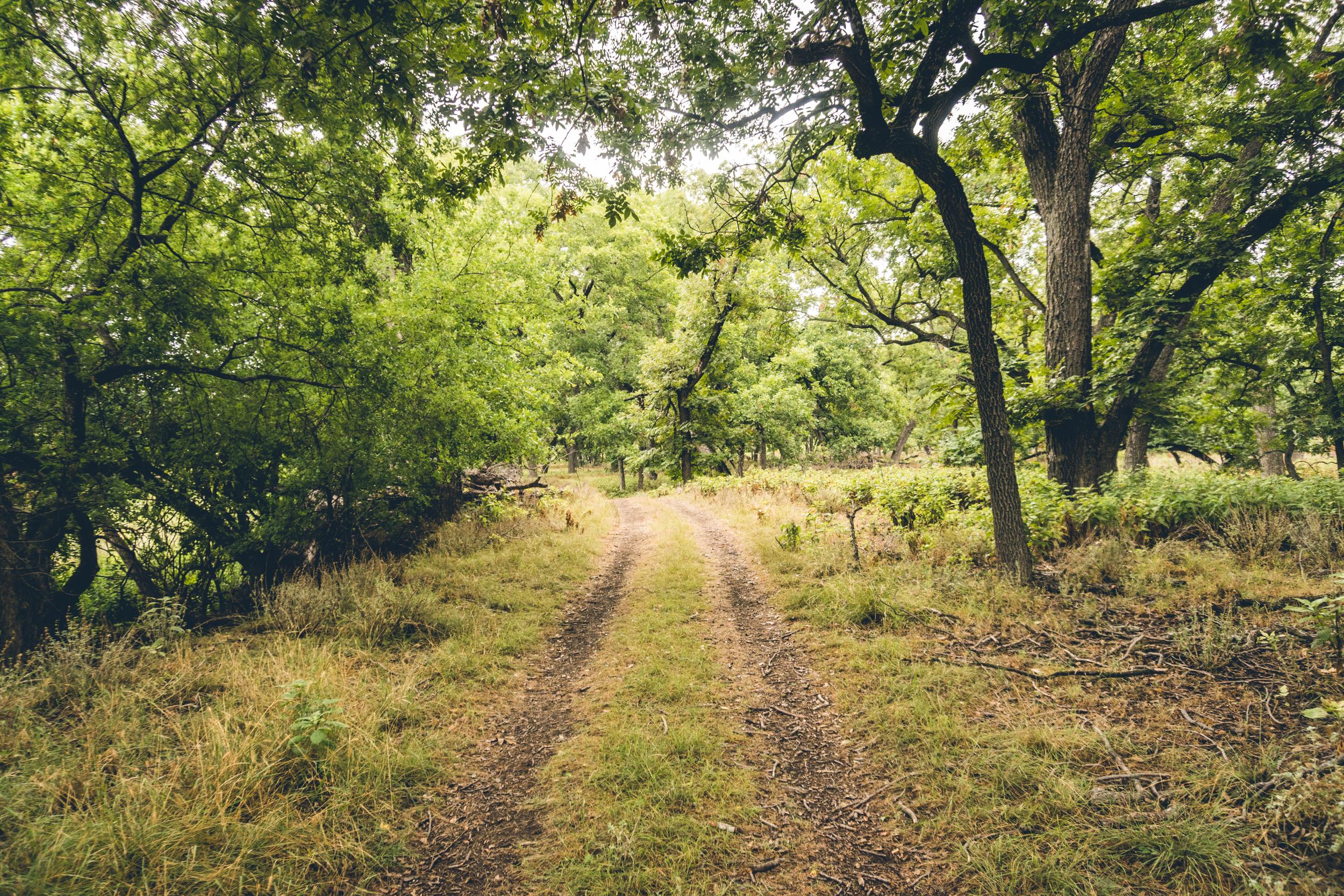 1808_Illano-River-State-Park-7.jpg