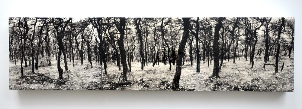 Truro Pines