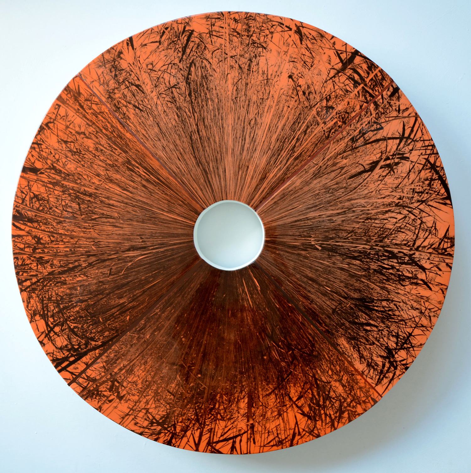 Phragmites