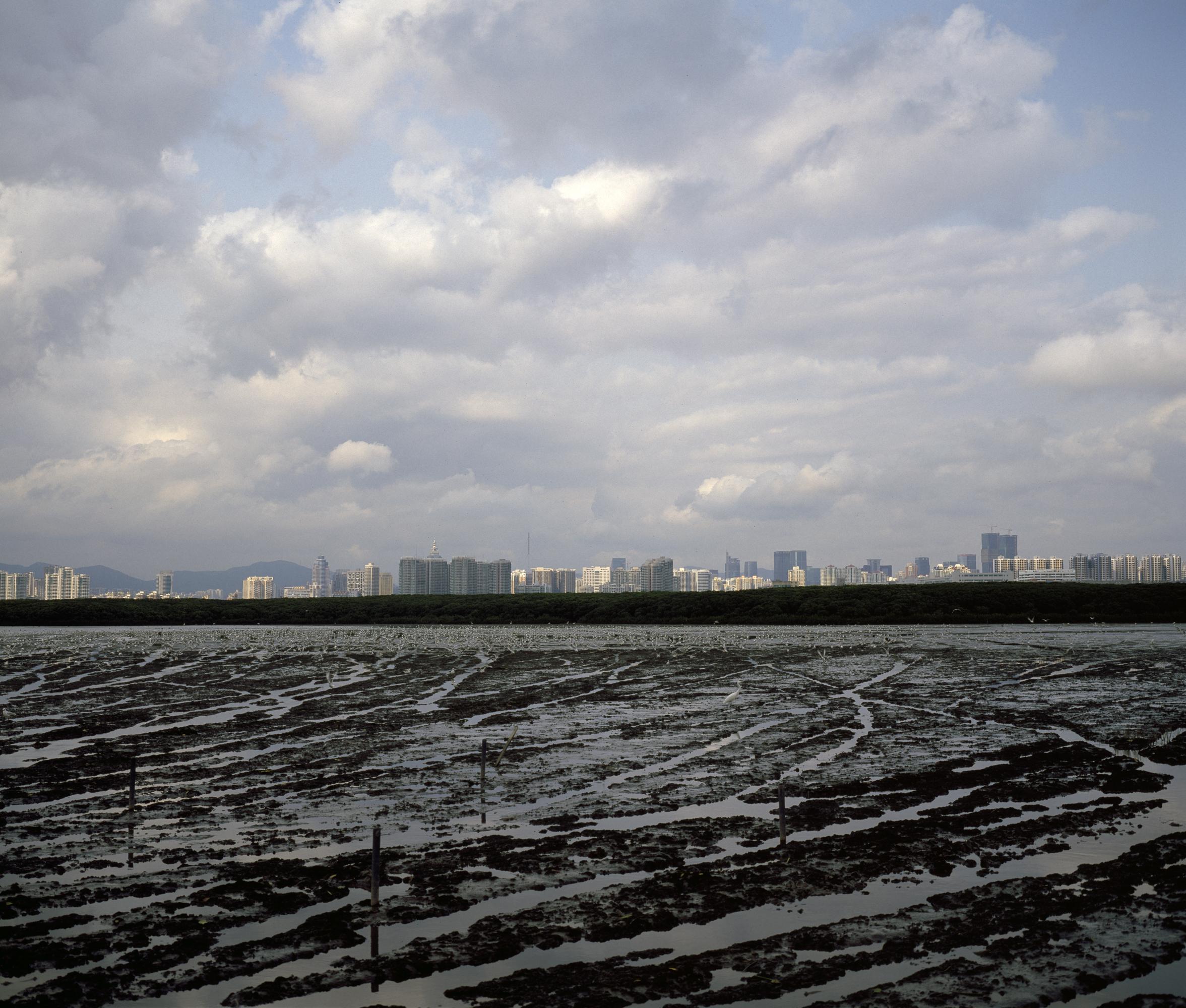 Deep Bay Low Tide (2010)