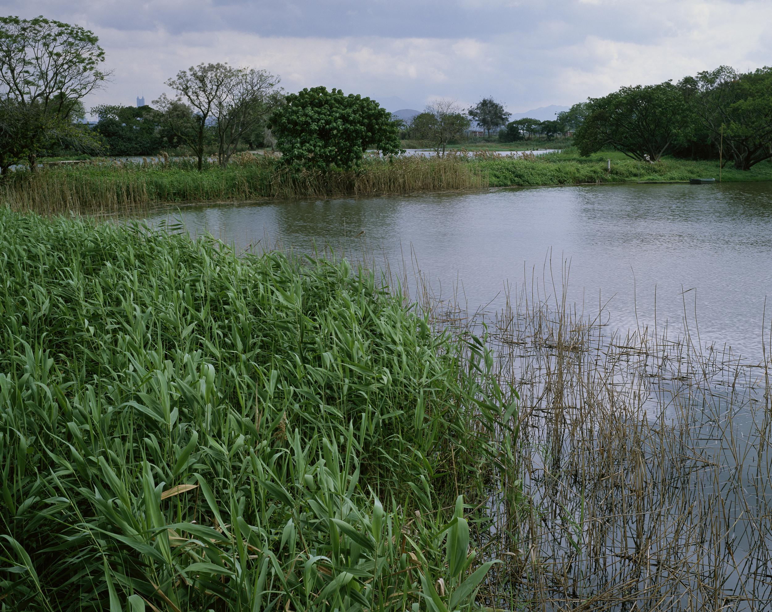 Fresh Water Pond (2010)