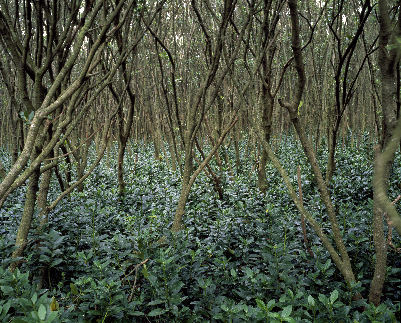 Mangrove #5 (2010)