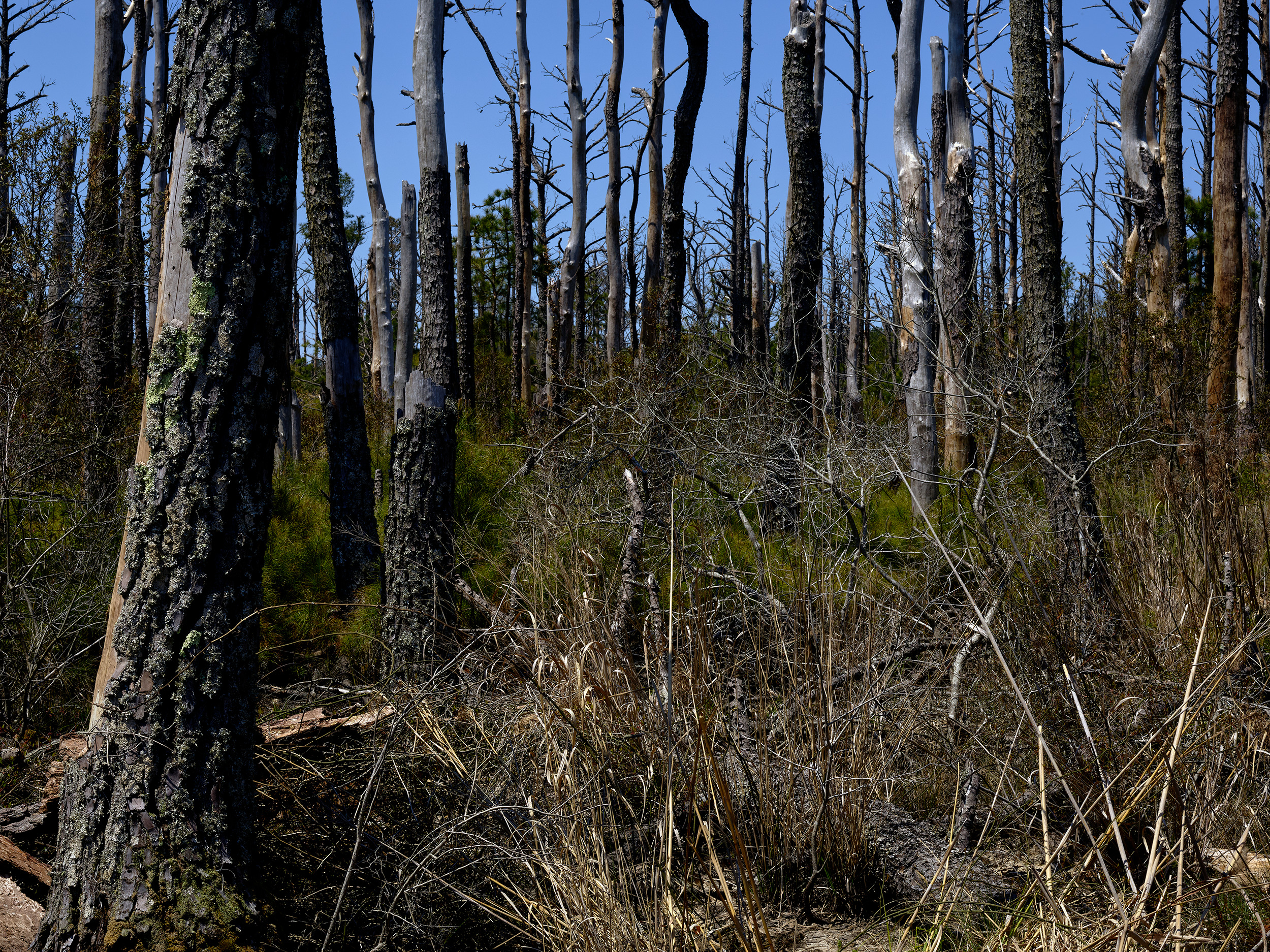 After Pine Beetle Invasion, Virginia District (2018)