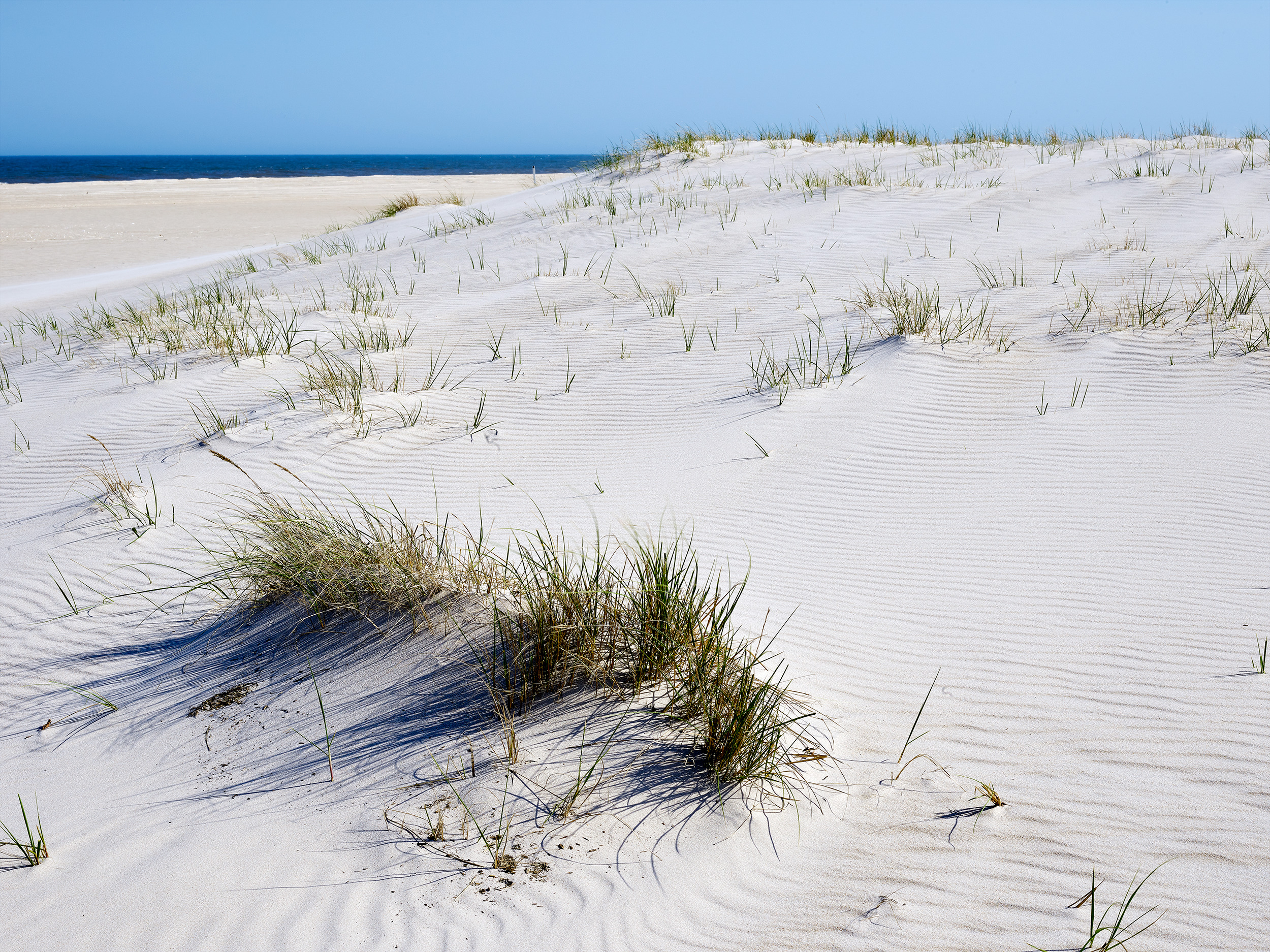 Dune with Sea, Maryland District (2018)