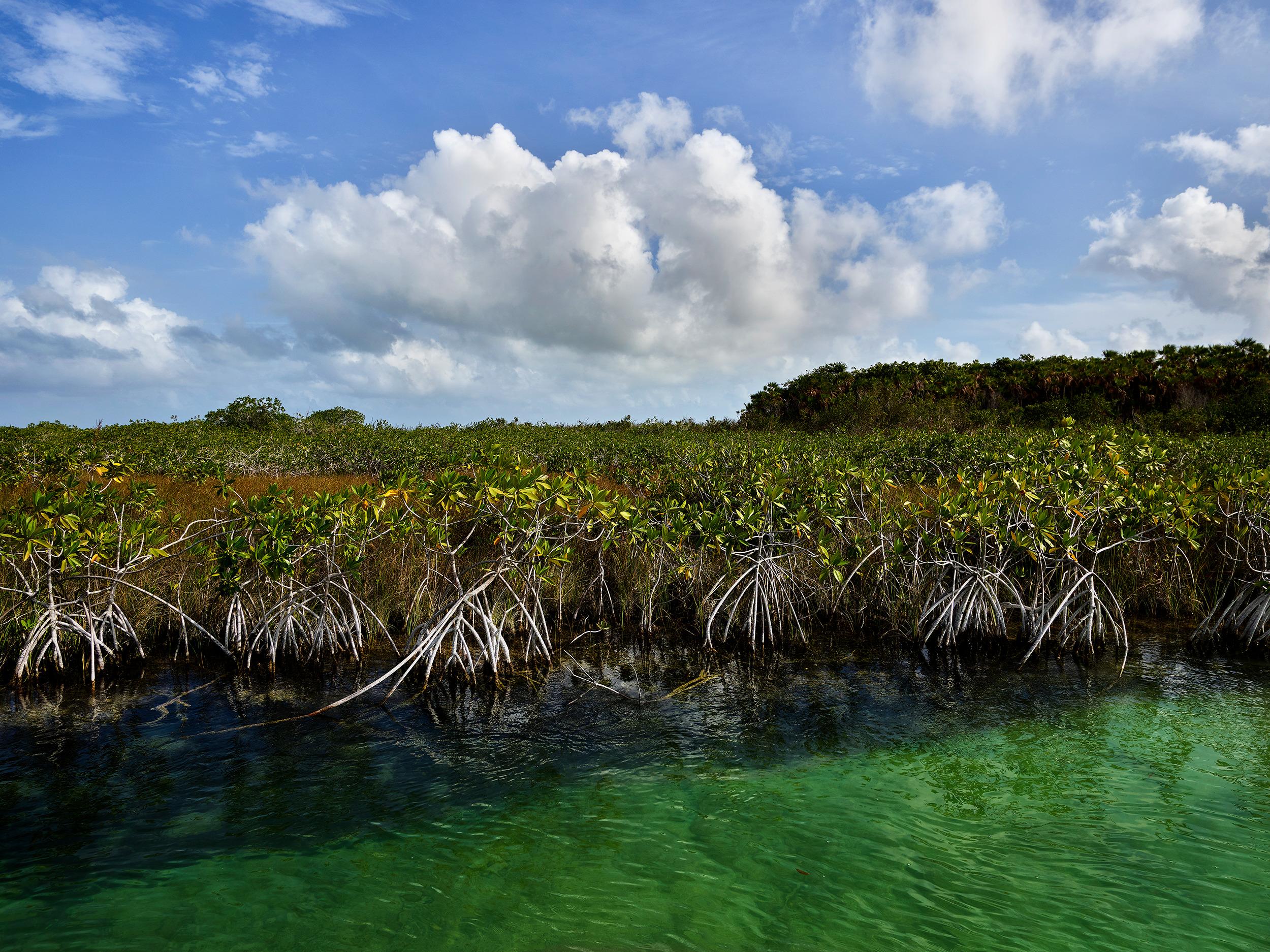 Dwarf Mangroves, Laguna Campeche (2018)