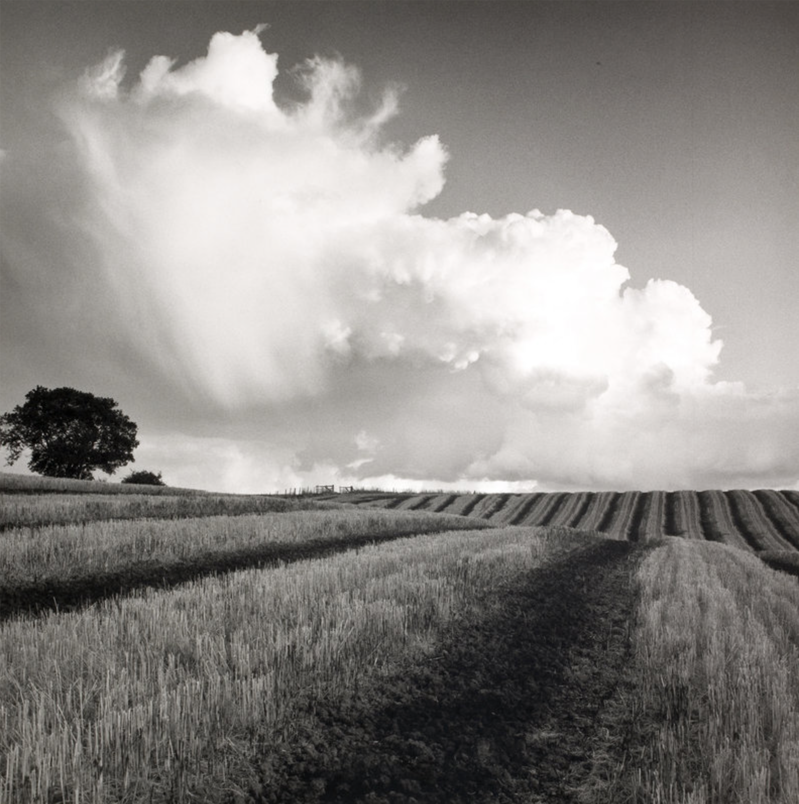 Fay Godwin, White Cloud Near Bilsington, Kent (1981)