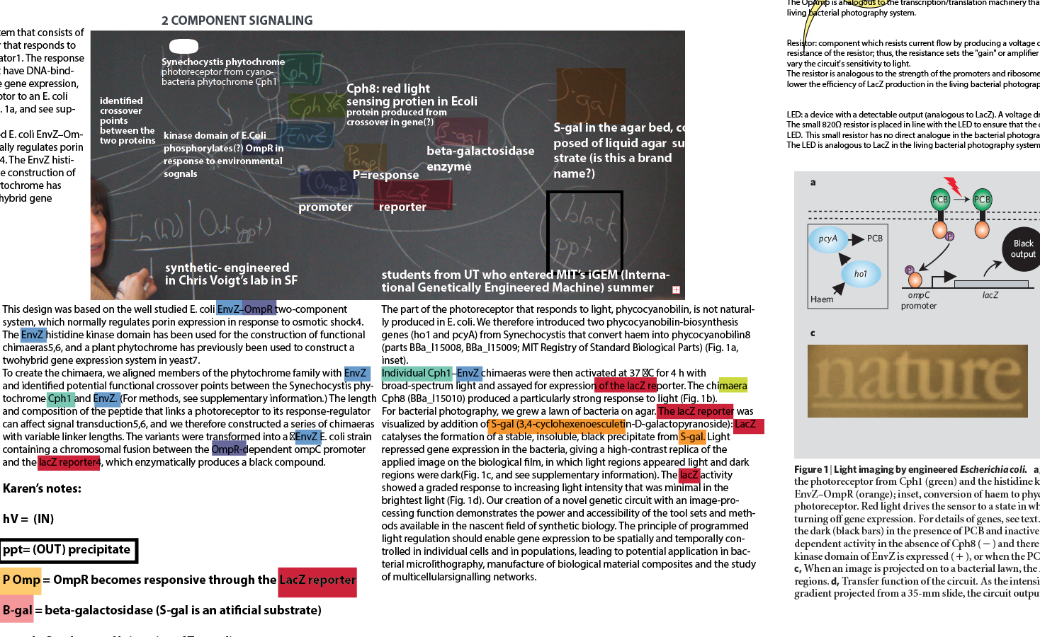My Illustrator drawing board; a midway view into the many months it took to decode and depict the microbial process that generates a bacterial photograph. The version that appeared in the book is in the header above.