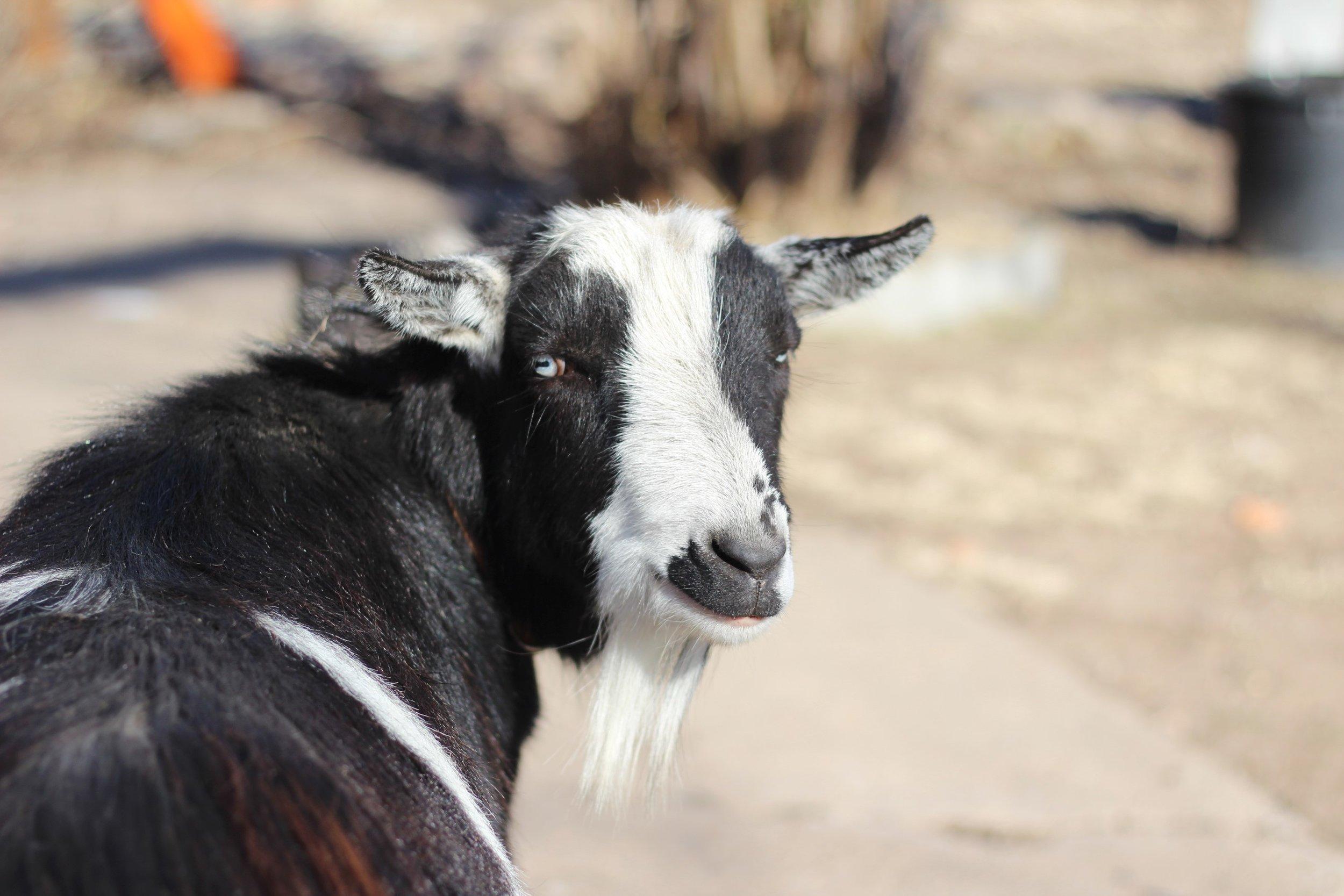 Animals on the farm 1.JPG