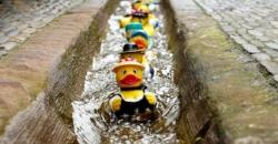 rubber-duck-bath-duck-toys-costume-106144-1-1024x536.jpeg