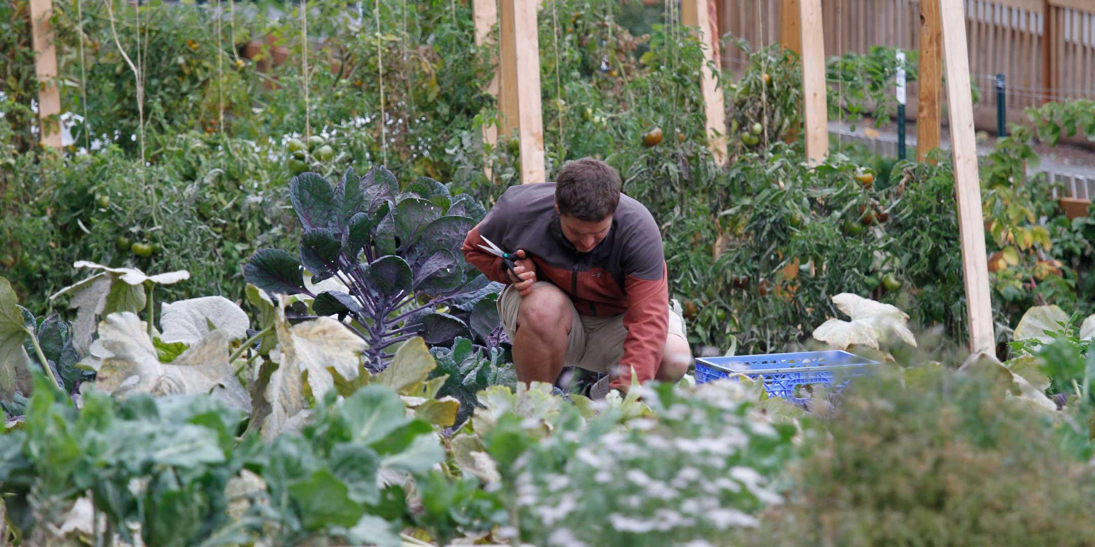 Seattle Community Farm