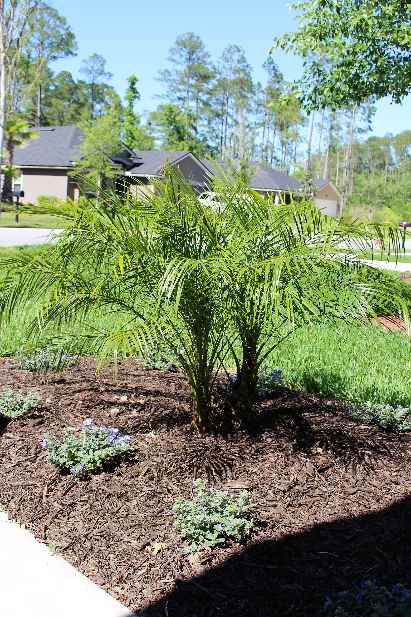 Love this little date palm!