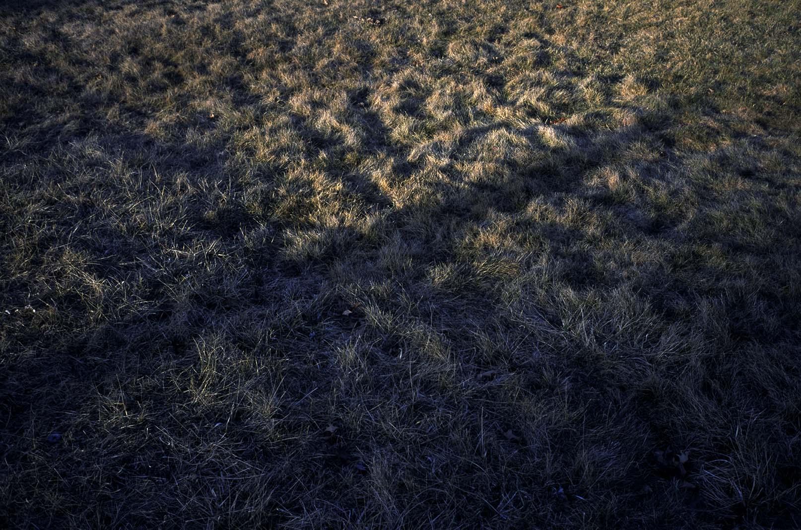 grass shadow 2.jpg