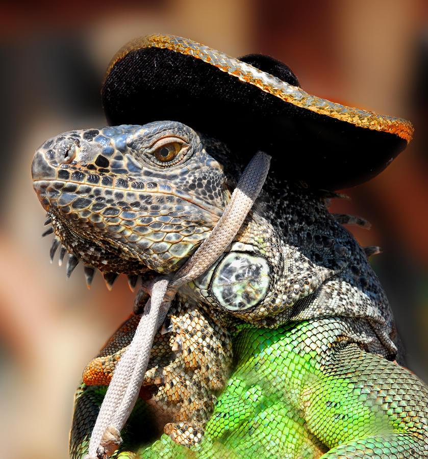 green-iguana-craig-incardone.jpg