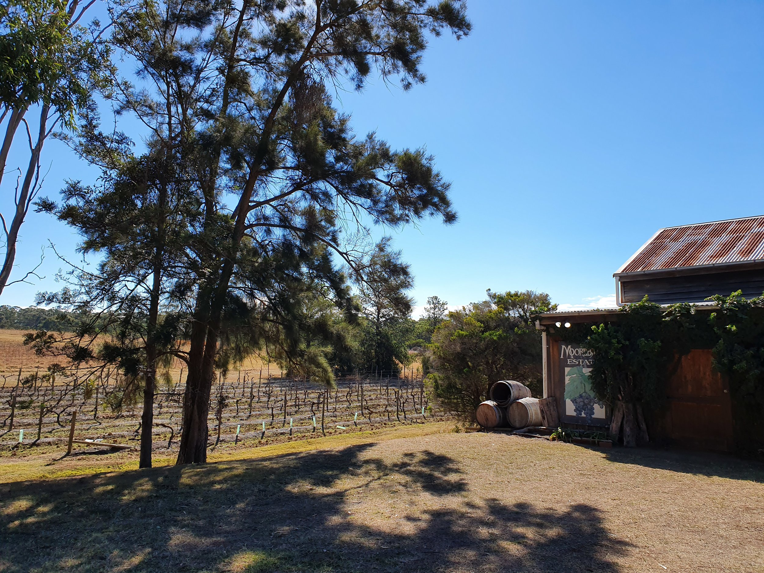 Moorebank vineyard Vineyard.jpg