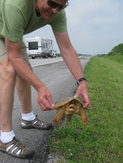Pissed off turtle