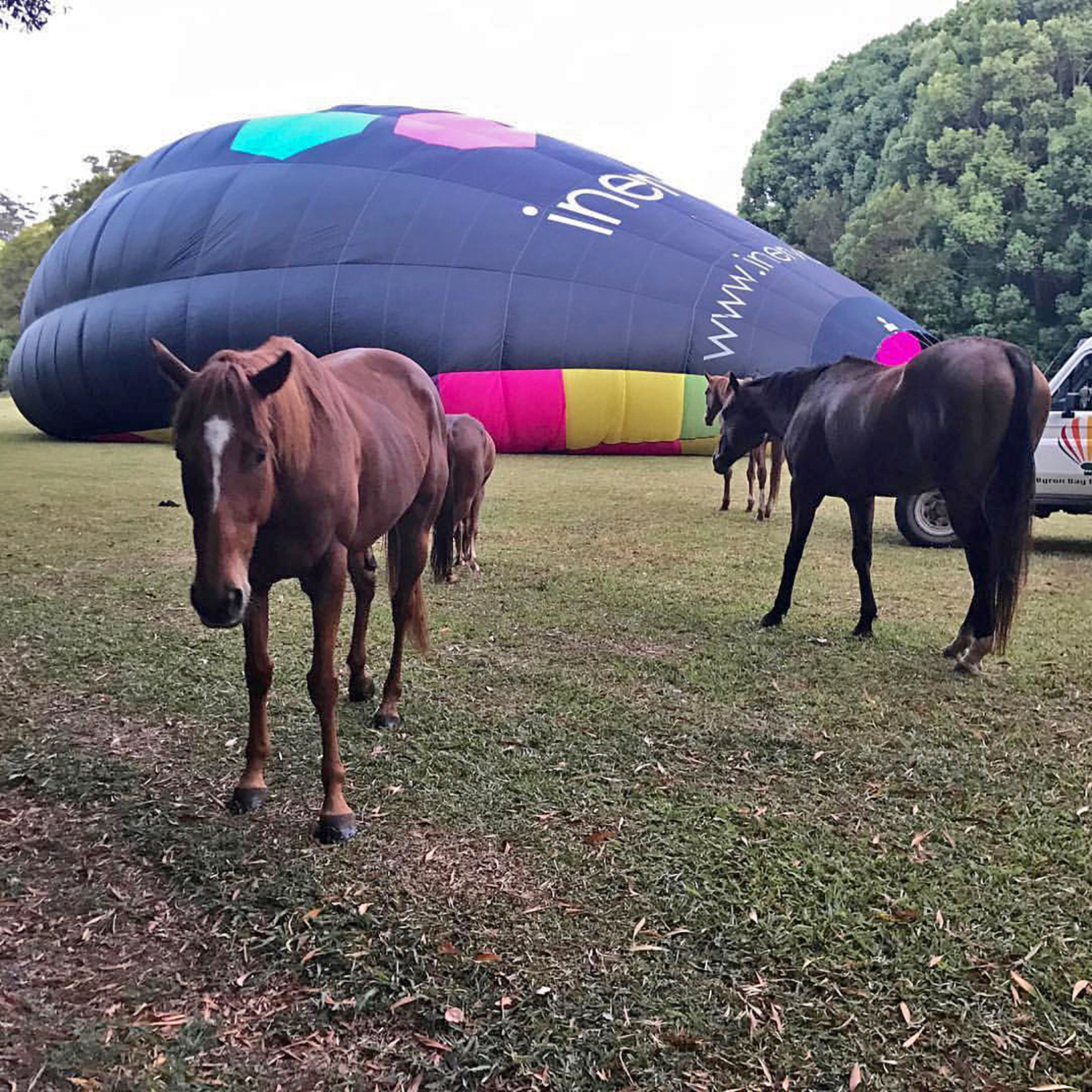 Horses at Byron.jpg