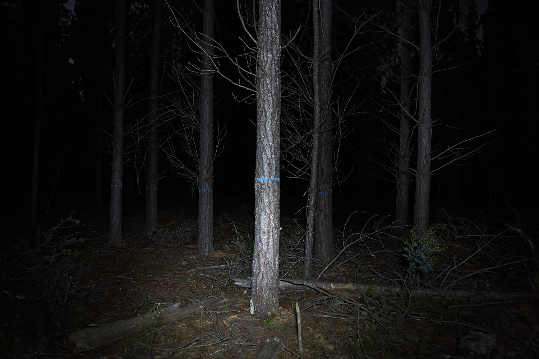 08_As_Night_Falls.jpg