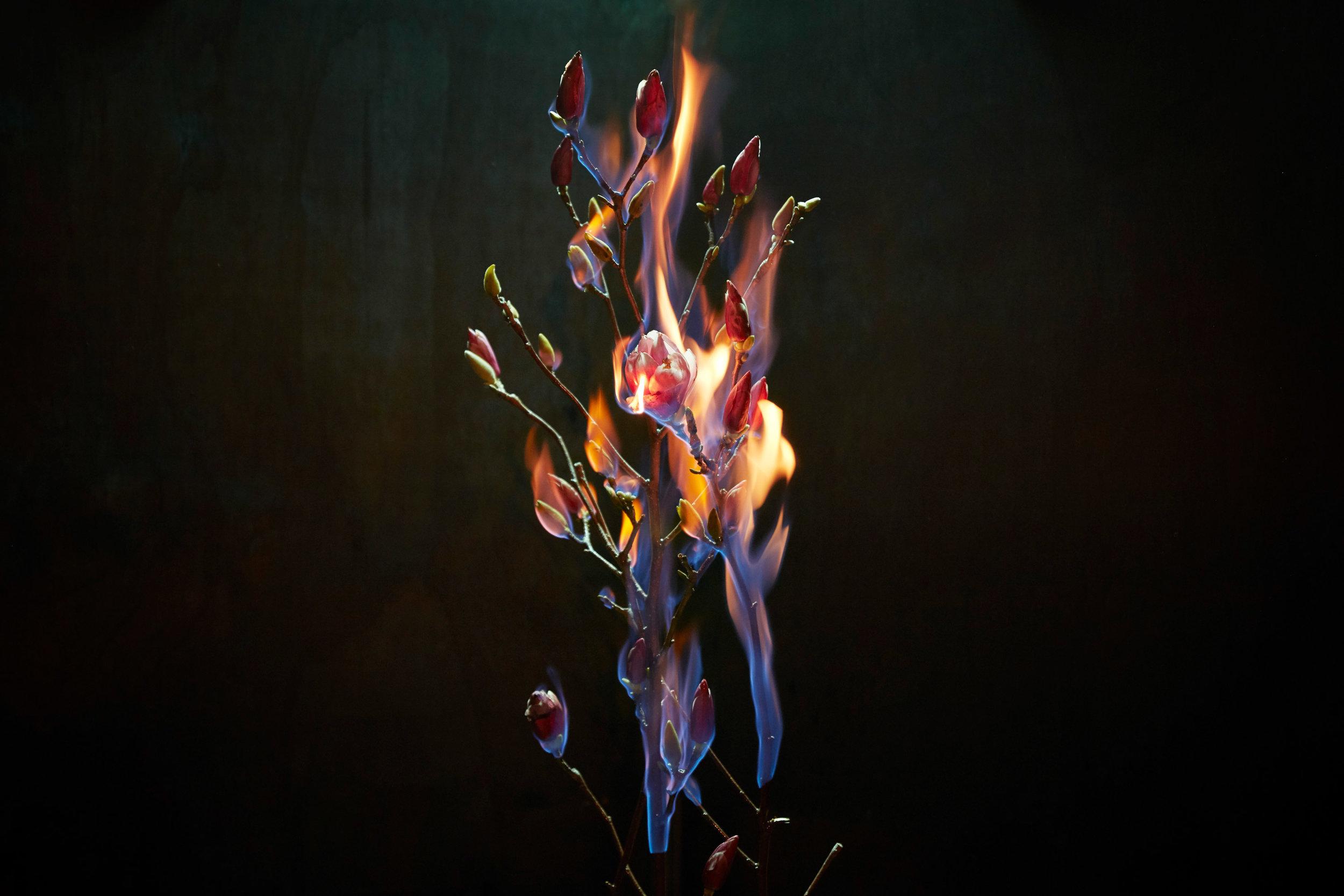 Project: Incendium
