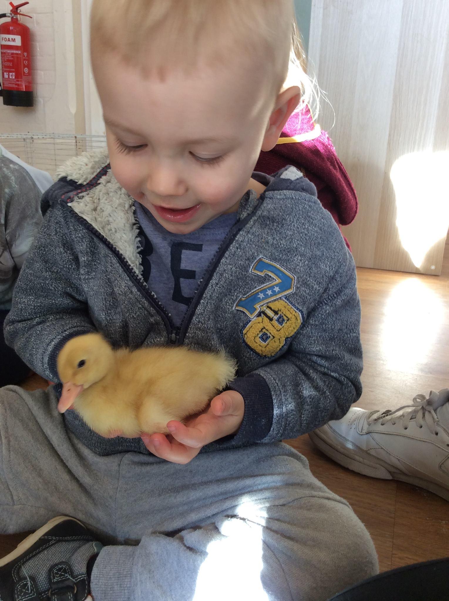 Ducklings at Lytchett Minster