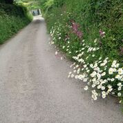 Cornwall 15.jpg