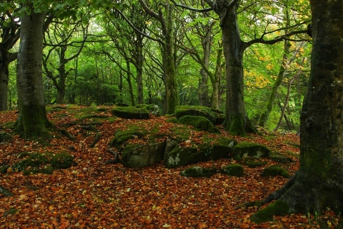 Falling Leaves Day Retreat  Kick up some leaves ... autumn russet & golds in ancient woodland. Autumn is a time to draw in, contemplate the year so far & re-establish equilibrium within as the season changes  Date: 5 October, 2019 Location: Northend Nearest station: Henley on Thames Time 10.00-17.00 Price: £70pp includes lunch, cake & refreshments