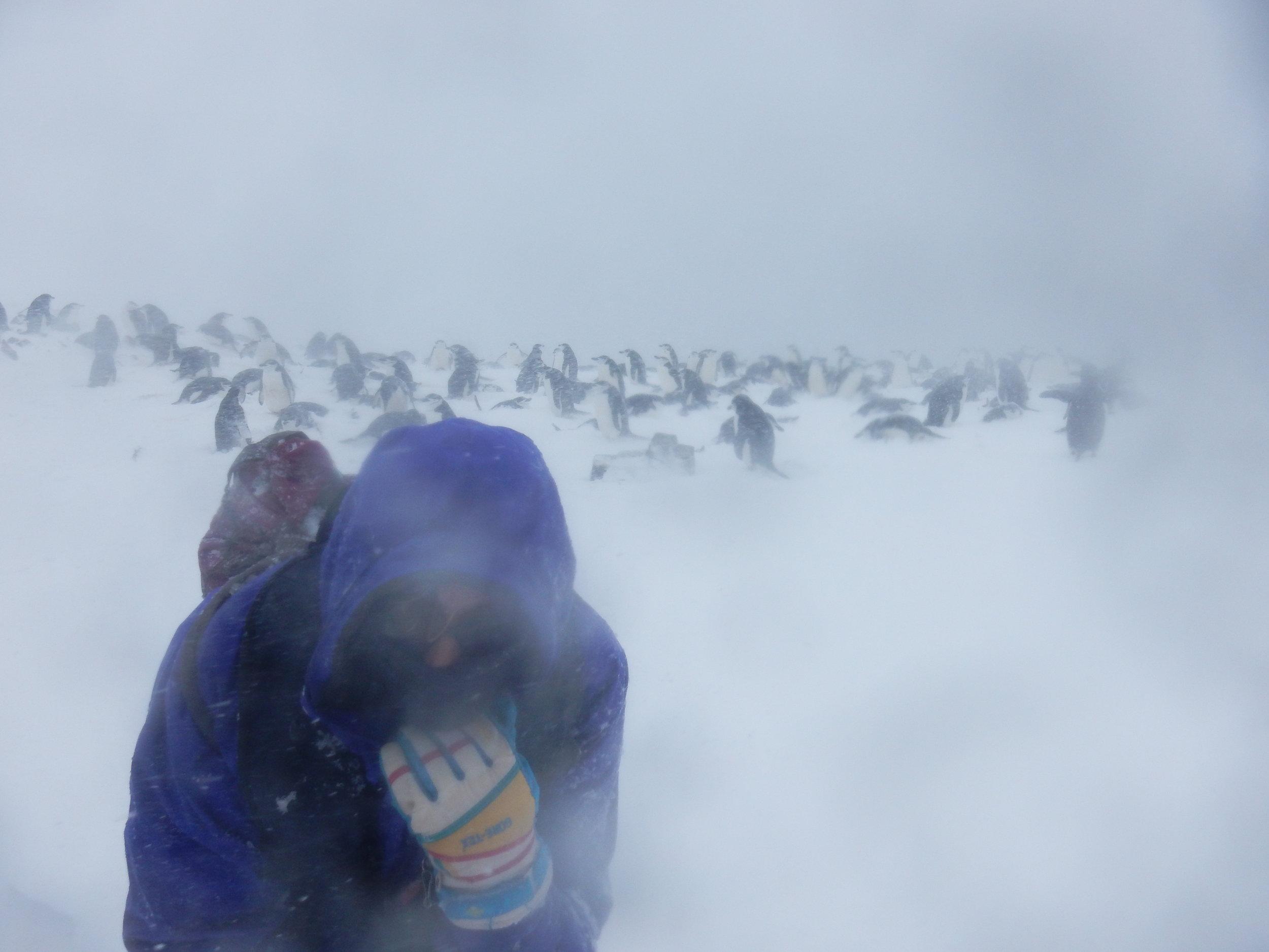 antarctica snow penguins.JPG
