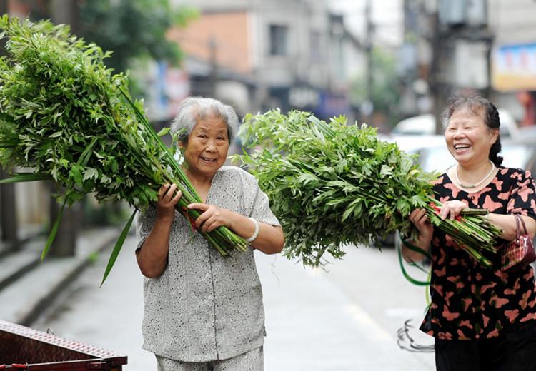Artemisia argyi und Kalmus werden für das Drachenbootfest vorbereitet