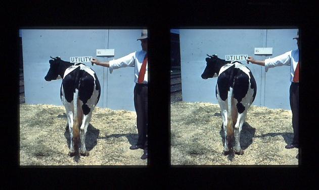 COW I.jpg