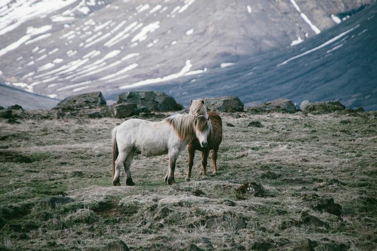 Iceland+Elopement (4).jpeg